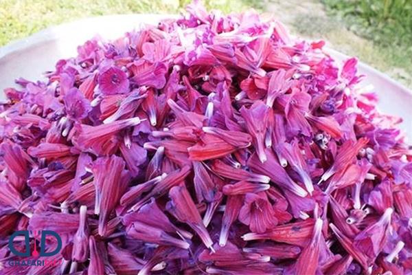 خواص گل گاوزبان برای پوست