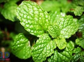 خواص پونه کوهی و طبع این سبزی خوش عطر!